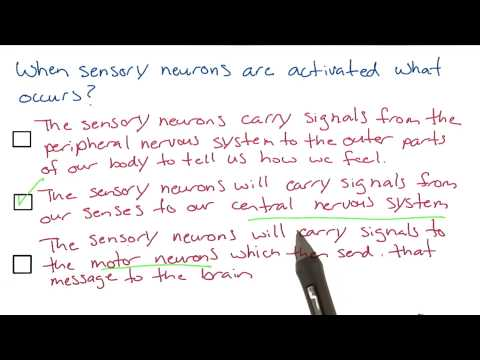 Signal from sensory neurons - Intro to Psychology thumbnail