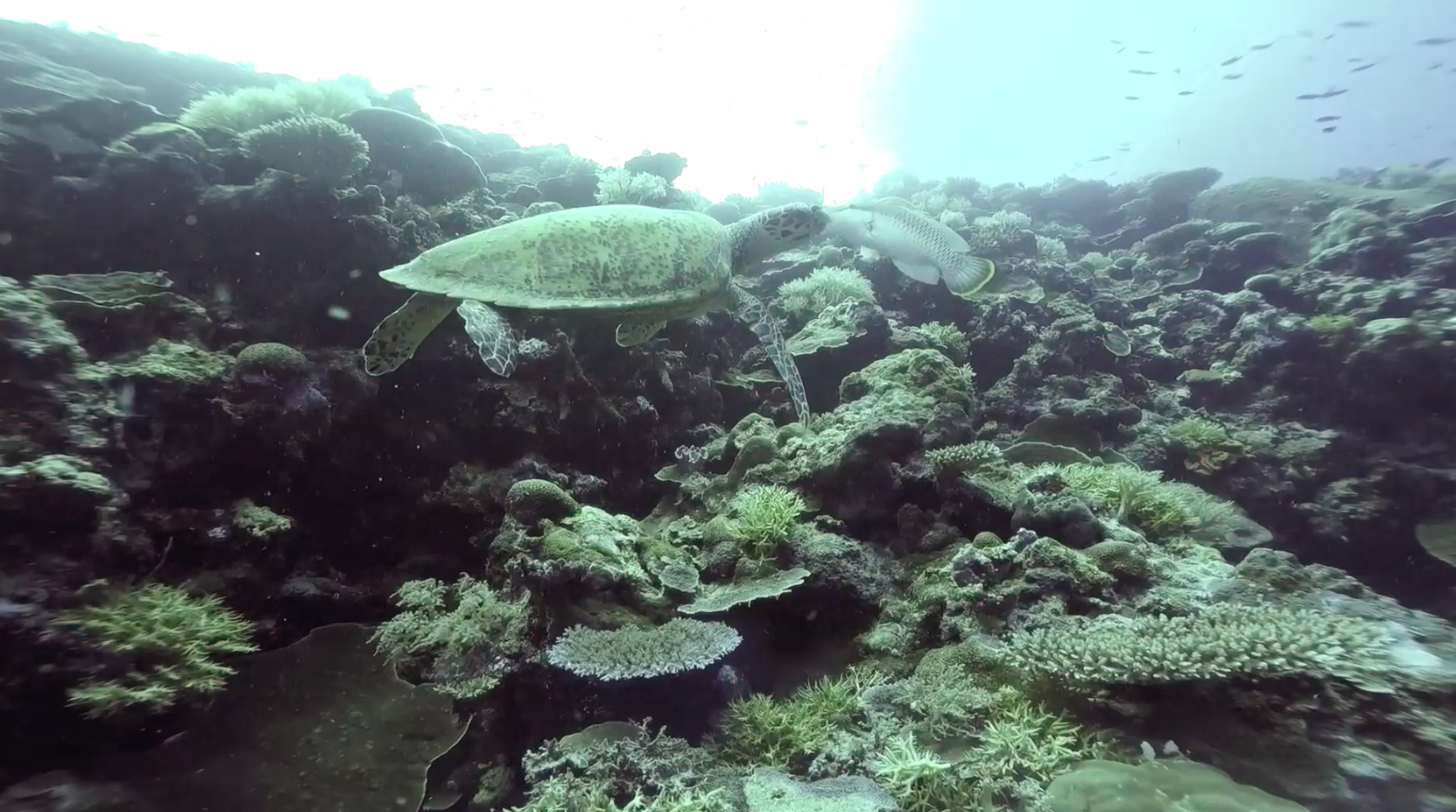 Hope for Reefs: Expedition Palau   California Academy of Sciences thumbnail
