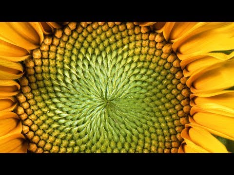 The Mind-Blowing Mathematics of Sunflowers - Instant Egghead #59 thumbnail