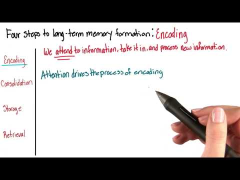 Four steps to long-term memory - Intro to Psychology thumbnail