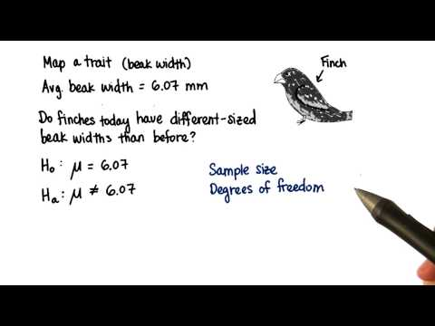 06-27 Finches - n and DF thumbnail