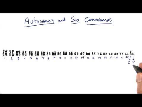 Sex Chromosomes thumbnail