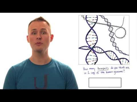 Genome Size thumbnail