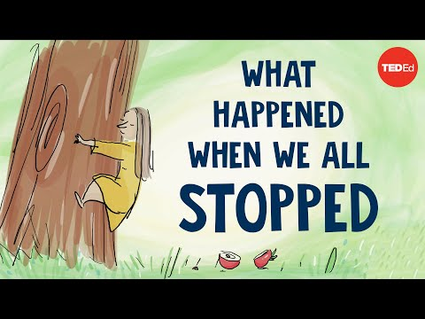 """""""What happened when we all stopped"""" narrated by Jane Goodall thumbnail"""
