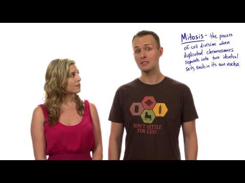 Mitosis thumbnail