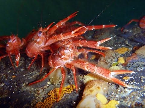 Science Today: Crabby Visitors | California Academy of Sciences thumbnail