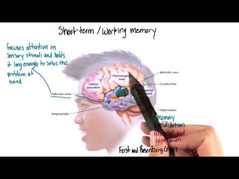 Short term or working memory in the brain - Intro to Psychology thumbnail