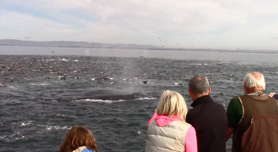 Science Today | Whale Feeding Frenzy | California Academy of Sciences thumbnail