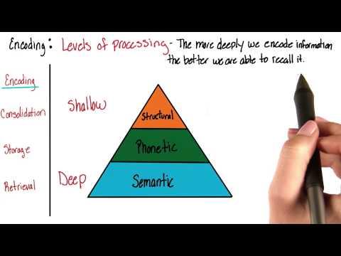 Encoding - Intro to Psychology thumbnail