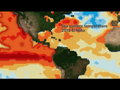 El Niño Impacts: The Good, the Bad and the Ugly | California Academy of Sciences thumbnail