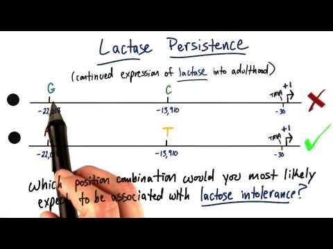 Lactase Persistence thumbnail