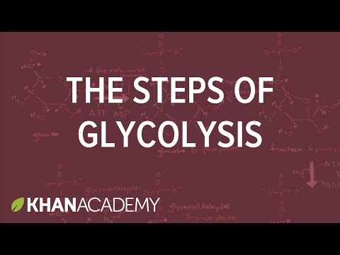 Glycolysis overview with subtitles | Amara