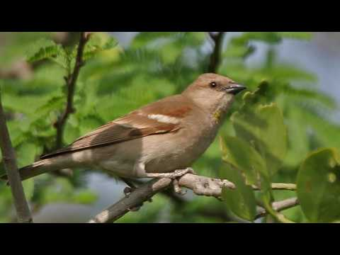 Science Today: Saving Birds from Windows | California Academy of Sciences thumbnail