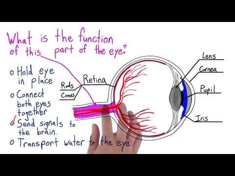 Last part of the eye thumbnail