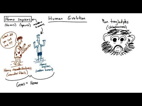 Human evolution thumbnail
