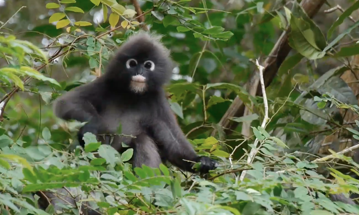 Expedition Malaysia: A Top-to-Bottom Rainforest Survey thumbnail