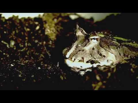 Science Today: Frog Tongues | California Academy of Sciences thumbnail
