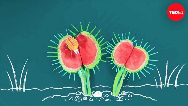 The wild world of carnivorous plants - Kenny Coogan thumbnail