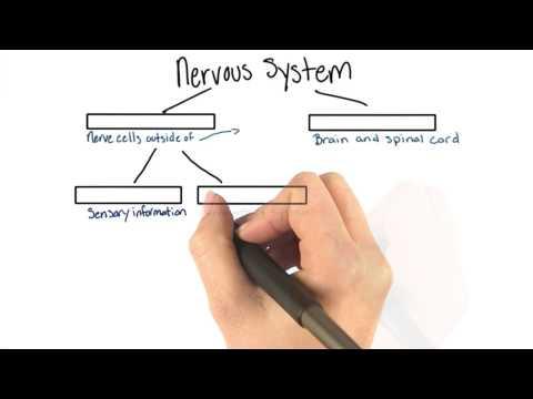 Nervous system parts thumbnail
